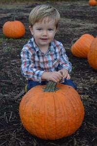 Halloween-pumpkin2 (2)