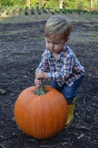 pumpkin-3 (2)